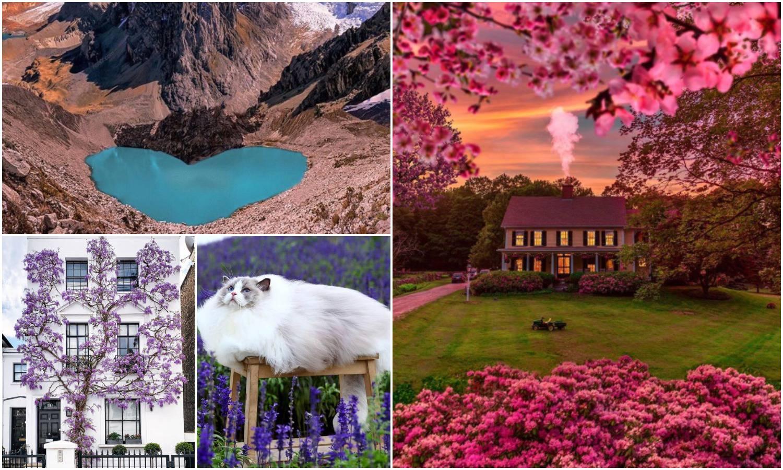 Pogledajte magične proljetne fotografije snimljene u svijetu