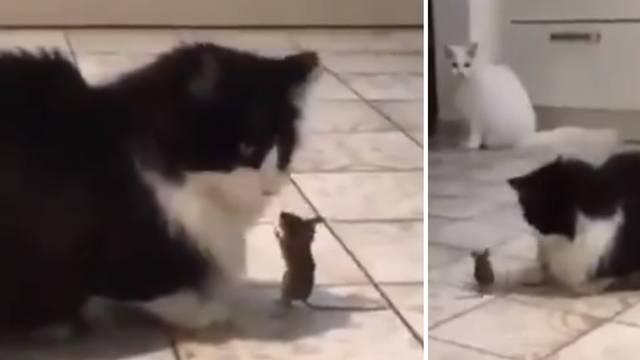 VIDEO Tom i Jerry na aparatima 'Prodajem svoje dvije mačke. Pa pogledajte što im miš radi!'