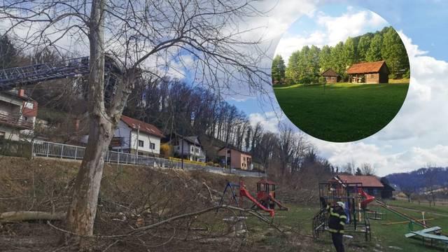 Srušili platane da bi se vidjela fasada na školi. Ravnatelj tvrdi: 'Taj drvored nije zgledal nikak'