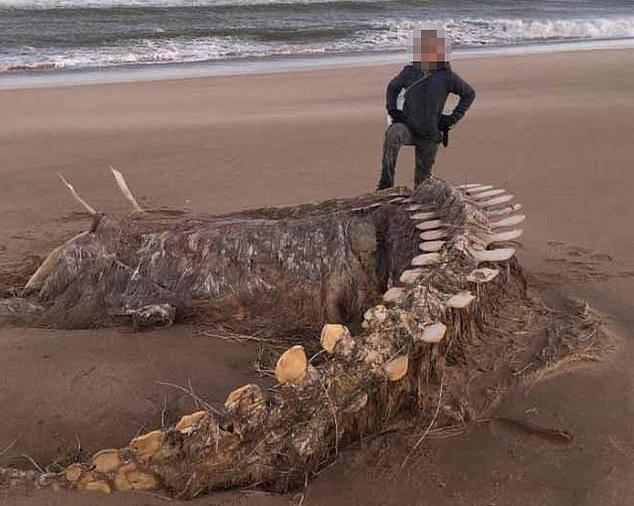 Kostur nepoznate životinje  je  zbunio čak i morske biologe...