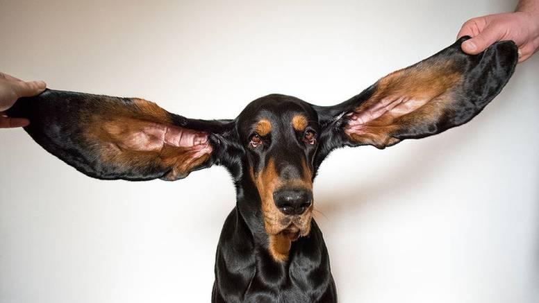 Udomila ju je zbog dugih ušiju, a sad je u Guinnessovoj knjizi rekorda: 'Volite ih kakvi jesu'