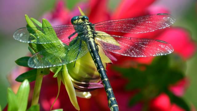 Jestivi kukci uskoro i u Europi: Čeka se dozvola za prodaju...