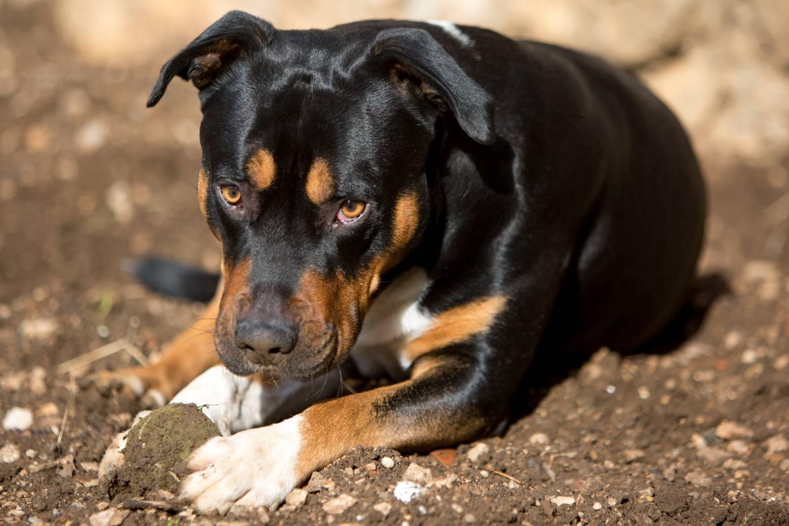 Najusamljeniji pas na svijetu nakon tri godine pronašao dom
