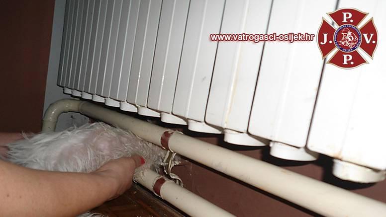 Psić zaglavio ispod radijatora, morali ga spašavati vatrogasci