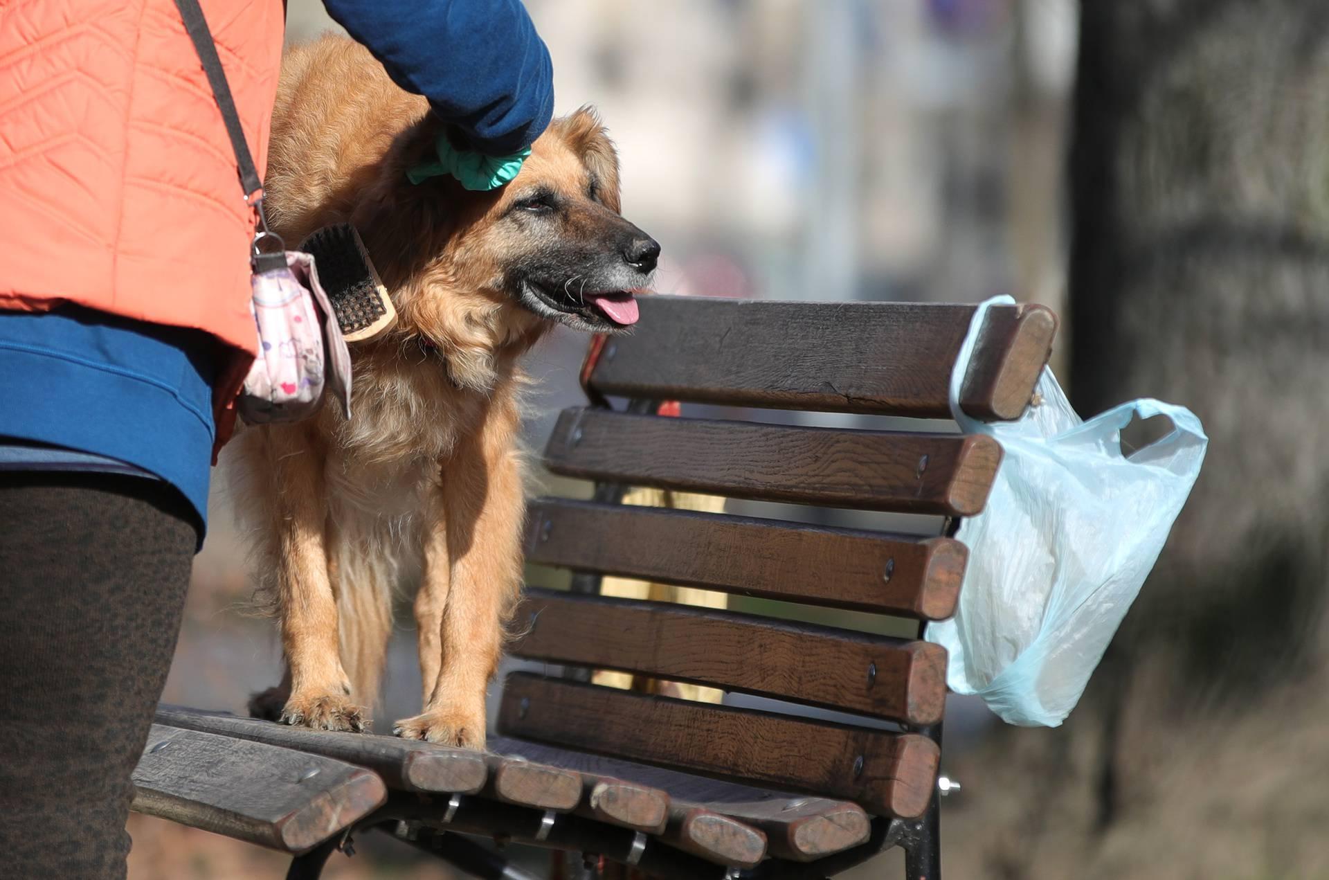 Jutarnja kozmetika i higijena vrlo su bitne u životu psa