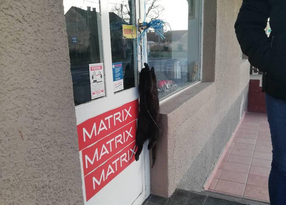 Kakvi ljudi mogu to napraviti?! Mrtvu mačku objesili na vrata