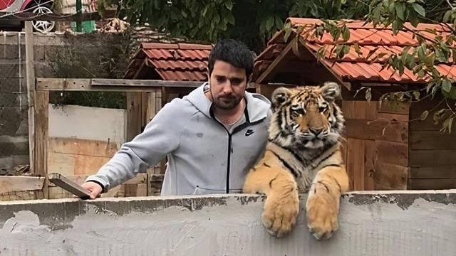 Kazna za držanje tigra može biti pet godina zatvora: 'Bila mi je inspekcija. Sve je po propisima'