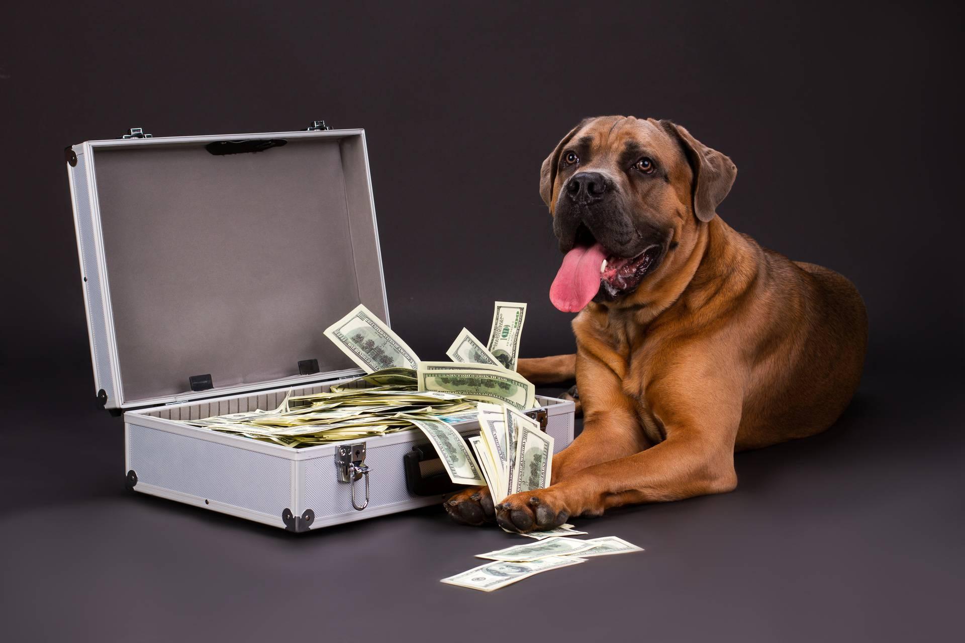 Traže veću pričuvu za vlasnike pasa: Oni plaćaju ljubavlju...