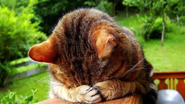 10 najčešćih problema i rješenja koje vlasnici imaju s mačkama