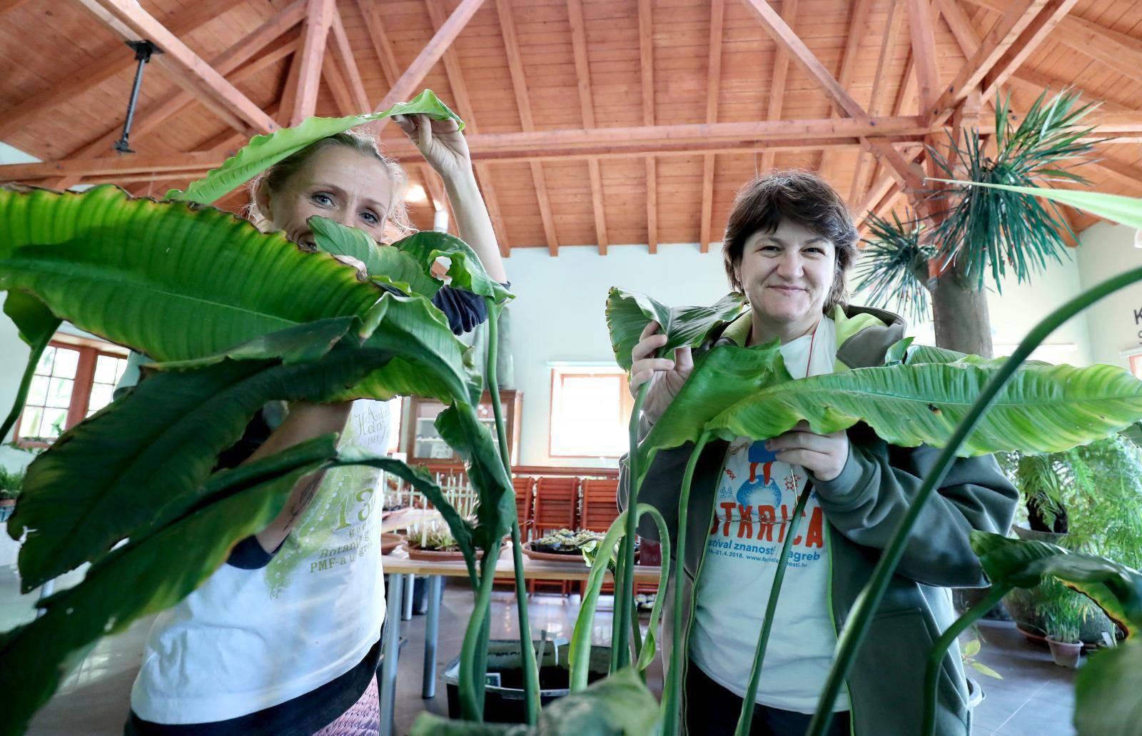Rasprodaja u Botaničkom vrtu: Mesožderke su već od 30 kuna