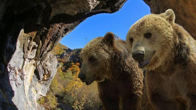 Krivolovci u Paklenici?! 'Našli smo dva mrtva medvjedića. Čini se da su ubijeni, još se istražuje'