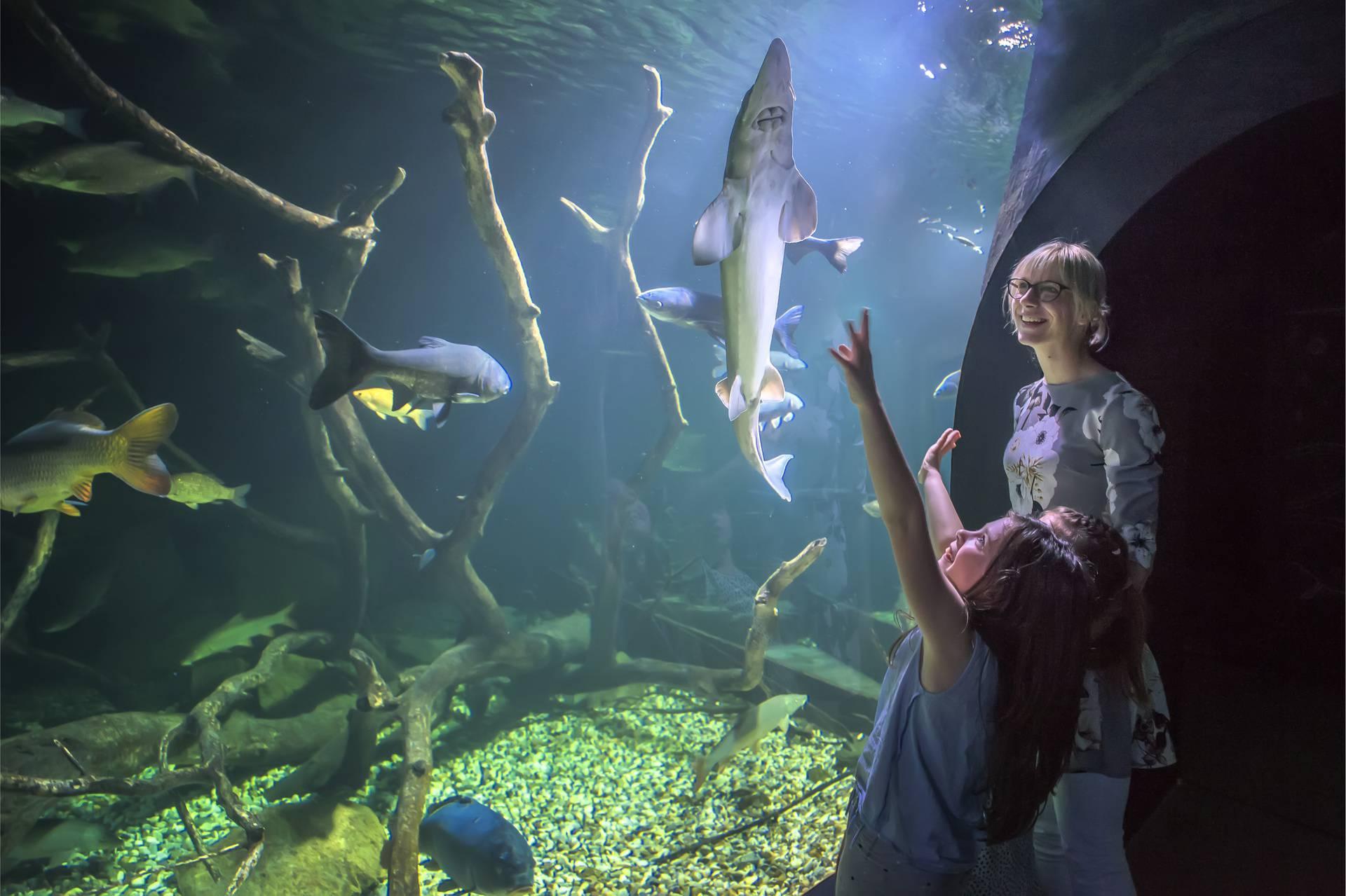Aquatika-slatkovodni akvarij Karlovac časti besplatnim ulazom u akvarij