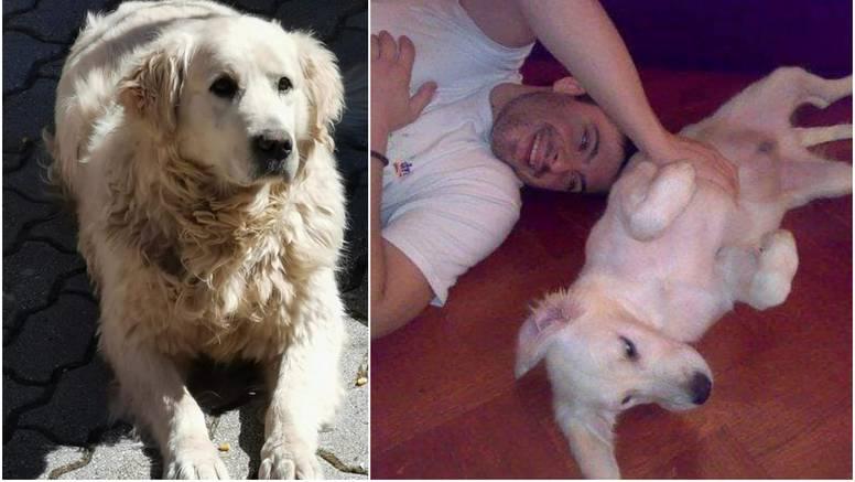 Uginuo je pas Toše Proeskog: Voljeni Bas, obožavao ga je!