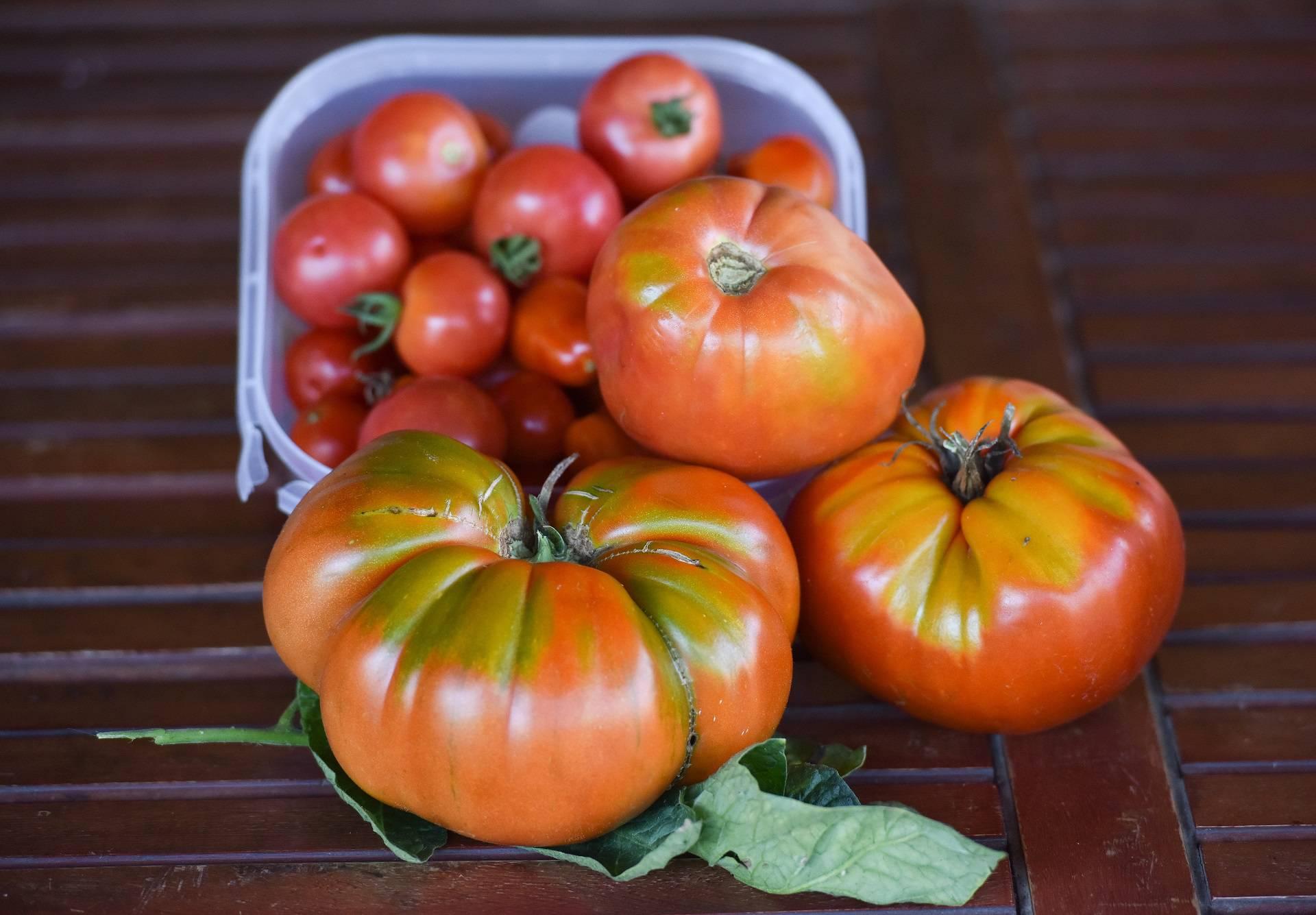Rajčice čuvajte u hladnjaku, no prije pripreme se trebaju ugrijati na sobnu temperaturu