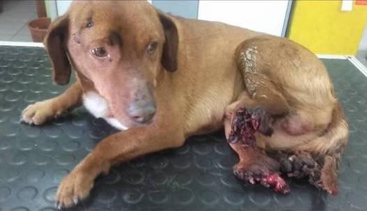 Umirao je u agoniji: Peppu je netko sjekirom odrezao nogice