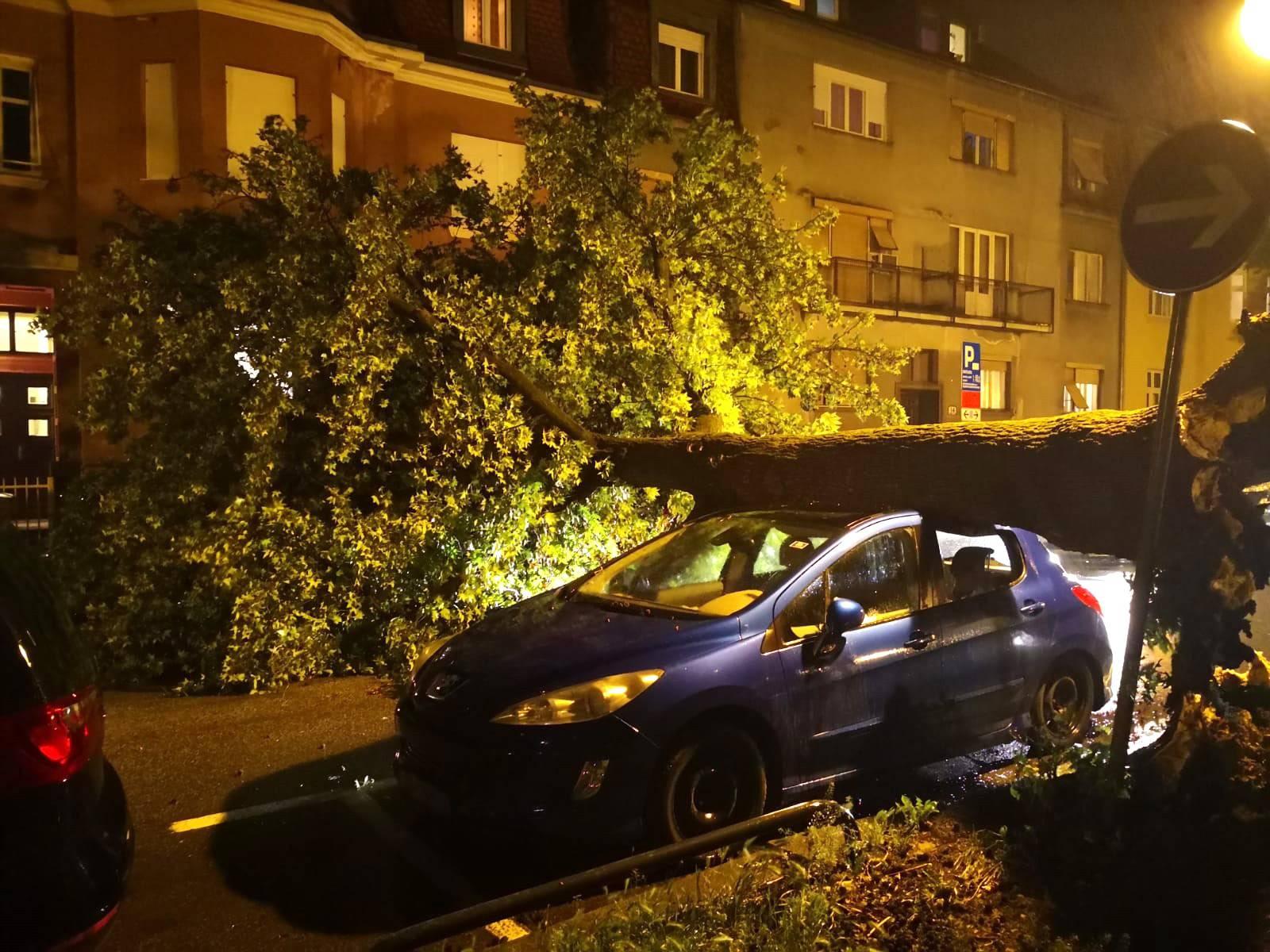 Evo što učiniti ako vam je vjetar srušio drvo na automobil
