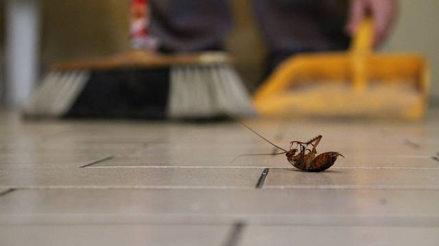 Cleaning up a cockroach