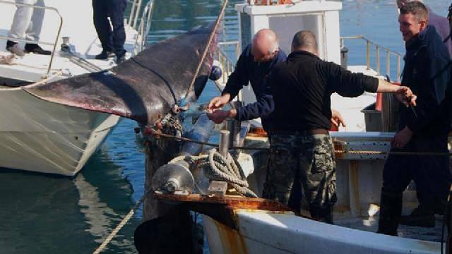 U Istri u ribarsku mrežu ulovili morskog psa dugog 8 metara!
