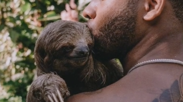 Neustrašiv: Seksi zoolog pliva s jaguarima, a maze ga zmije