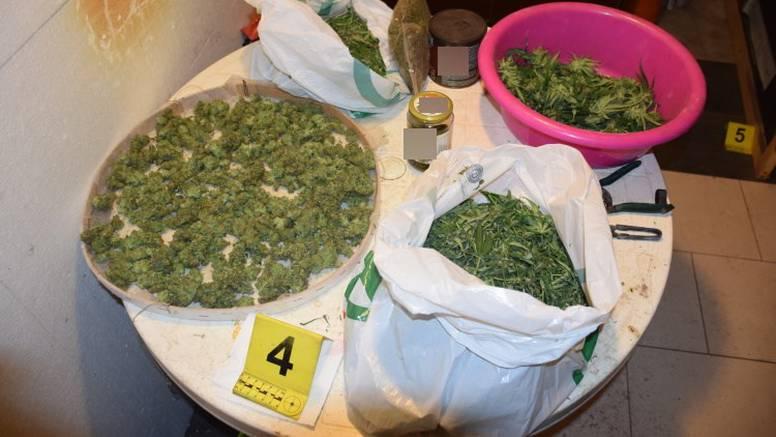 Policija u dva stana u Zagrebu pronašla 12,8 kg marihuane