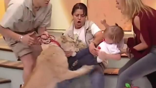 Uživo: Lavić napao bebu u TV showu, jedva su ga odvukli