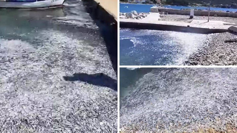 Jato riba na Cresu je uletjelo u stupicu i izletjelo na obalu...
