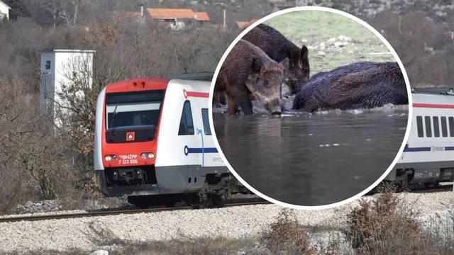 Nesreća kod Pakraca: Vlak je naletio na krdo divljih svinja