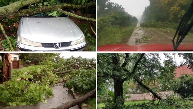 VIDEO Vjetar čupao stabla u Slavoniji: 'Sjedio sam na kavi kad se nebo spojilo sa zemljom'