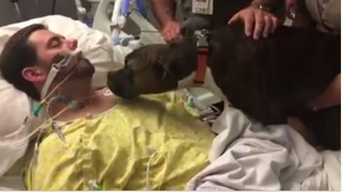 Vjeran pas oprostio se  od svog vlasnika koji je umro u bolnici