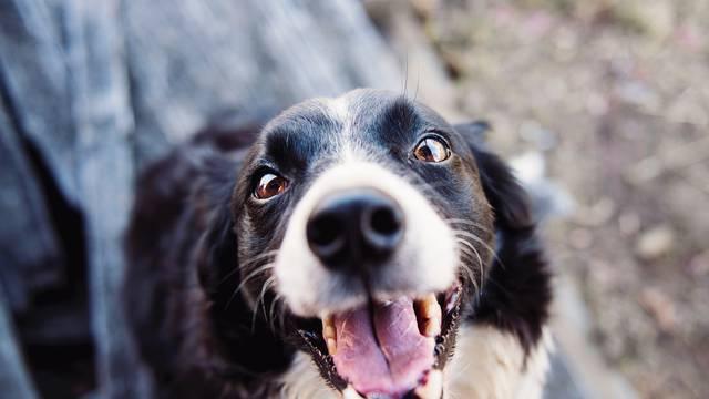 Zagonetka je riješena: Zašto psi obožavaju 'loviti' svoj rep?