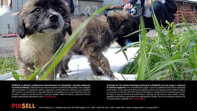 U Zagrebu i Sisku predstavljeni gradski azili za napuštene pse!