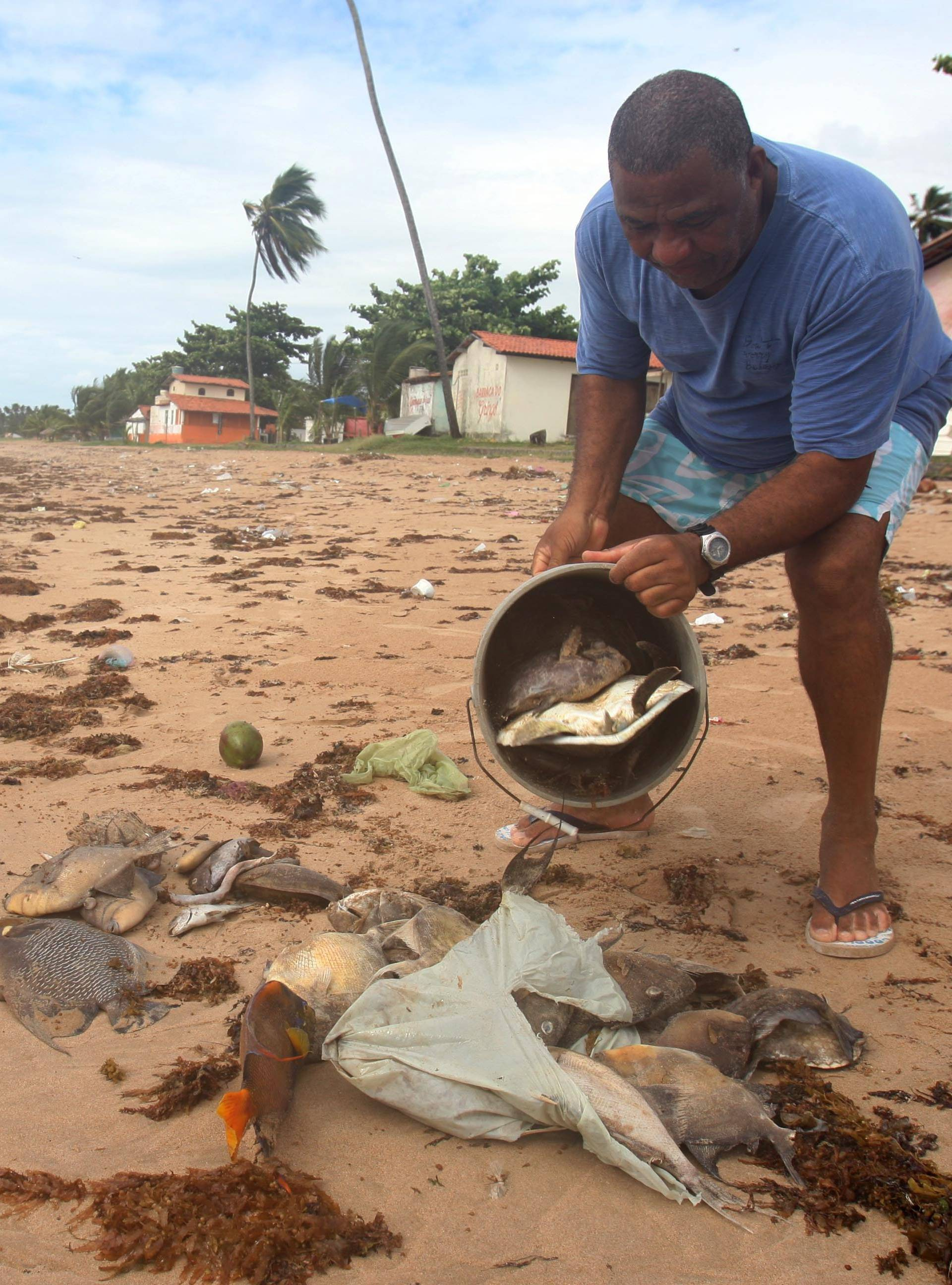 Fish of various sizes and species have appeared dead in the last ten days at beach coastline Aratuba in Itaparica Island, Salvador, Bahia