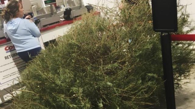 Vratila božićno drvce u dućan: 'Želim novac nazad, umrlo je'