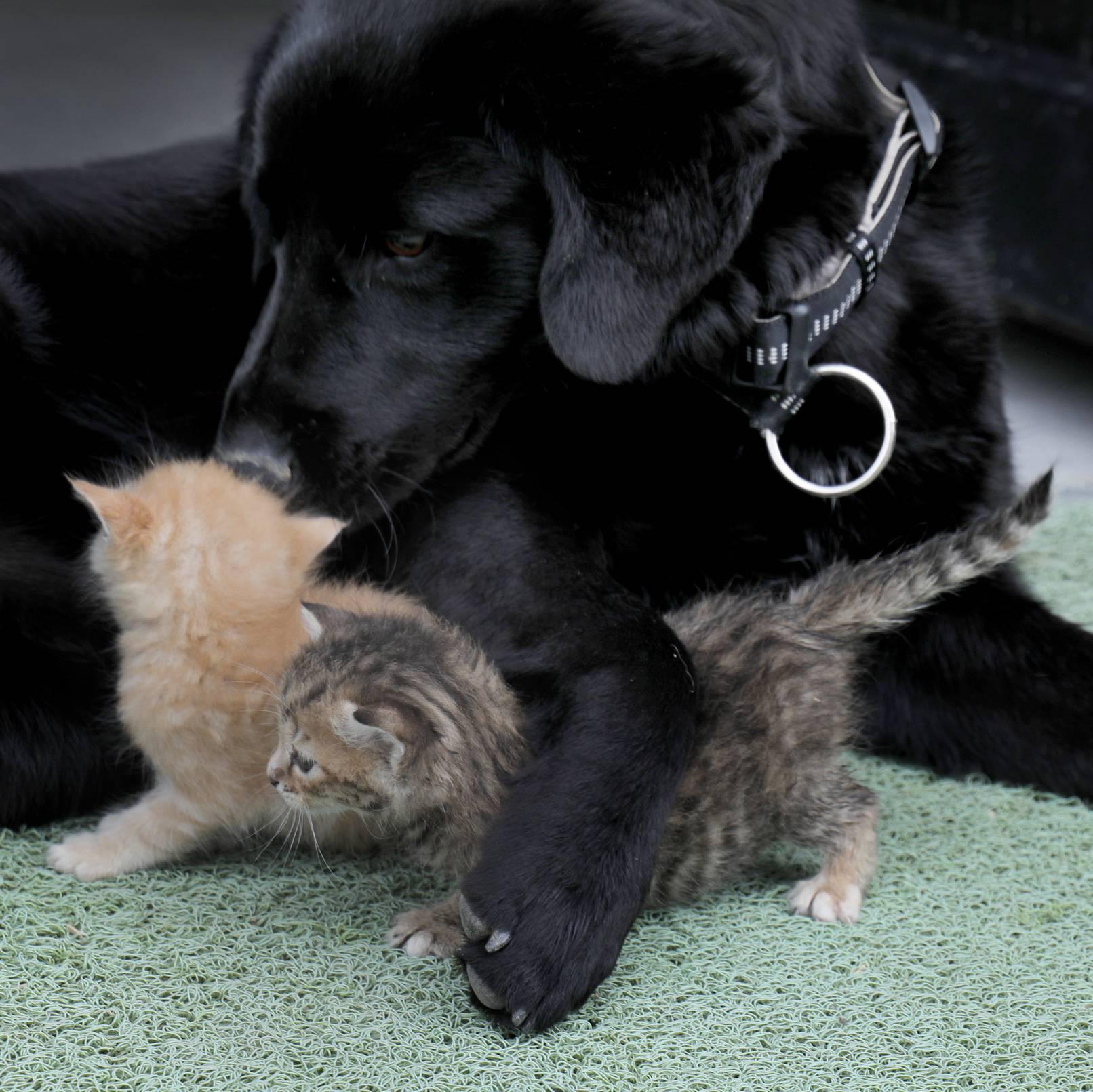 Mačići su ostali bez majke, dadilja im je postao pas Bleki