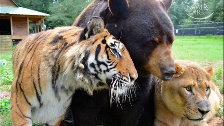 Lav, tigar i medo: Nerazdvojni od kad su zajedno prošli pakao