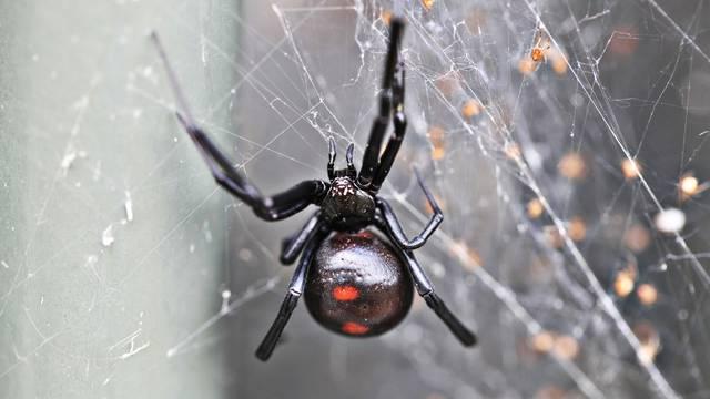 Spriječite pauke da uđu u dom uz pomoć ovih super trikova