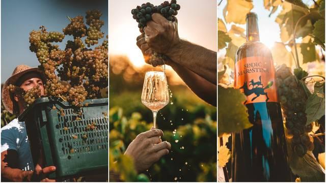 Savršene fotografije berbe kraj Skradina - uživaju sva osjetila