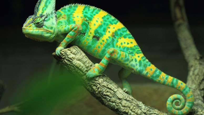 Znanstvenici stvorili umjetnu kožu koja sliči kameleonskoj