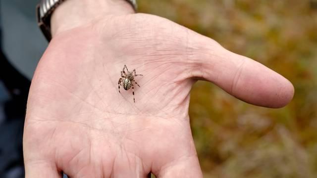 Vidite li pauka u kući nemojte ga ubiti - ne radite to baš nikad