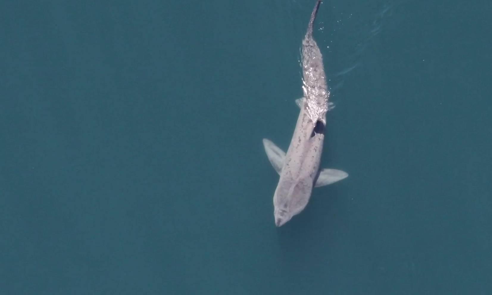 Turista (41) napao morski pas dok je ronio, muškarac umro