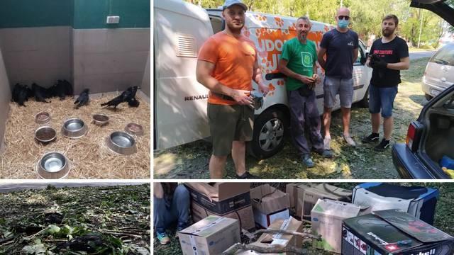 Spas za ranjene ptice u Požegi: Više od 60 ih je u oporavilištu Zoološkog, slomljena im krila