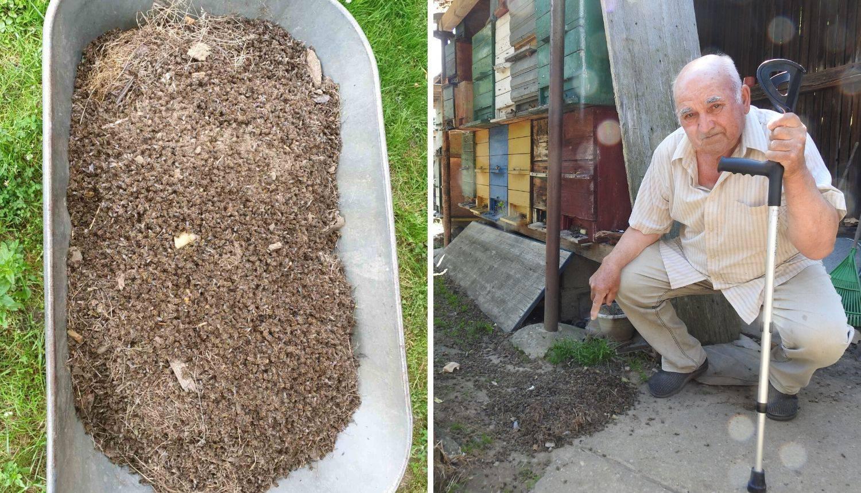 Pčele u Međimurju su otrovane: 'Ministrica je obećala pomoć'