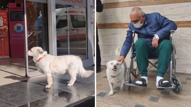 Vjeran pas pred bolnicom čekao bolesnog vlasnika čak šest dana