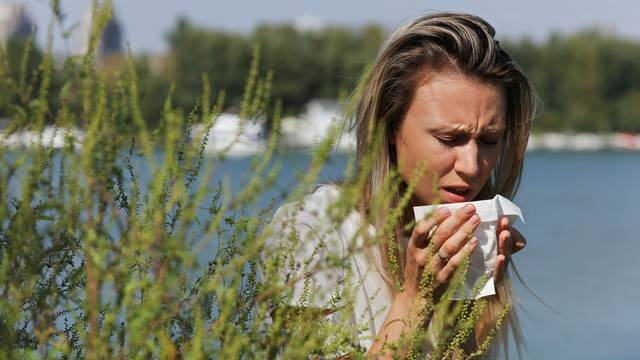 Pollen, Ragweed allergy, Woman sneezing in a tissue otdoors