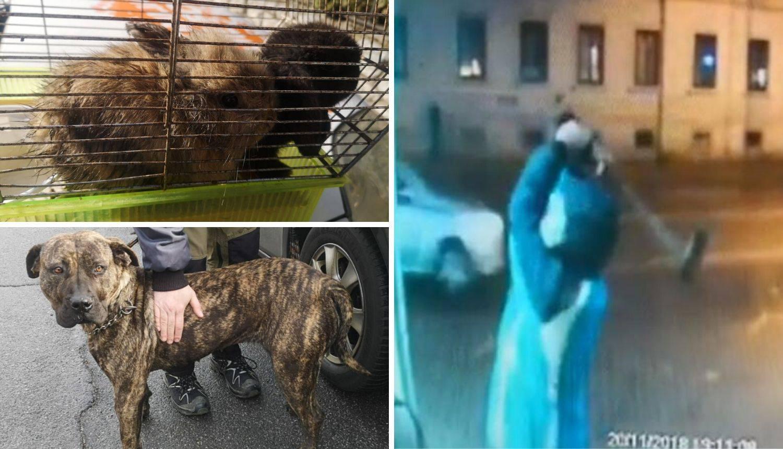 Pucao u radnika Čistoće: Dva kunića i psa zaplijenila policija