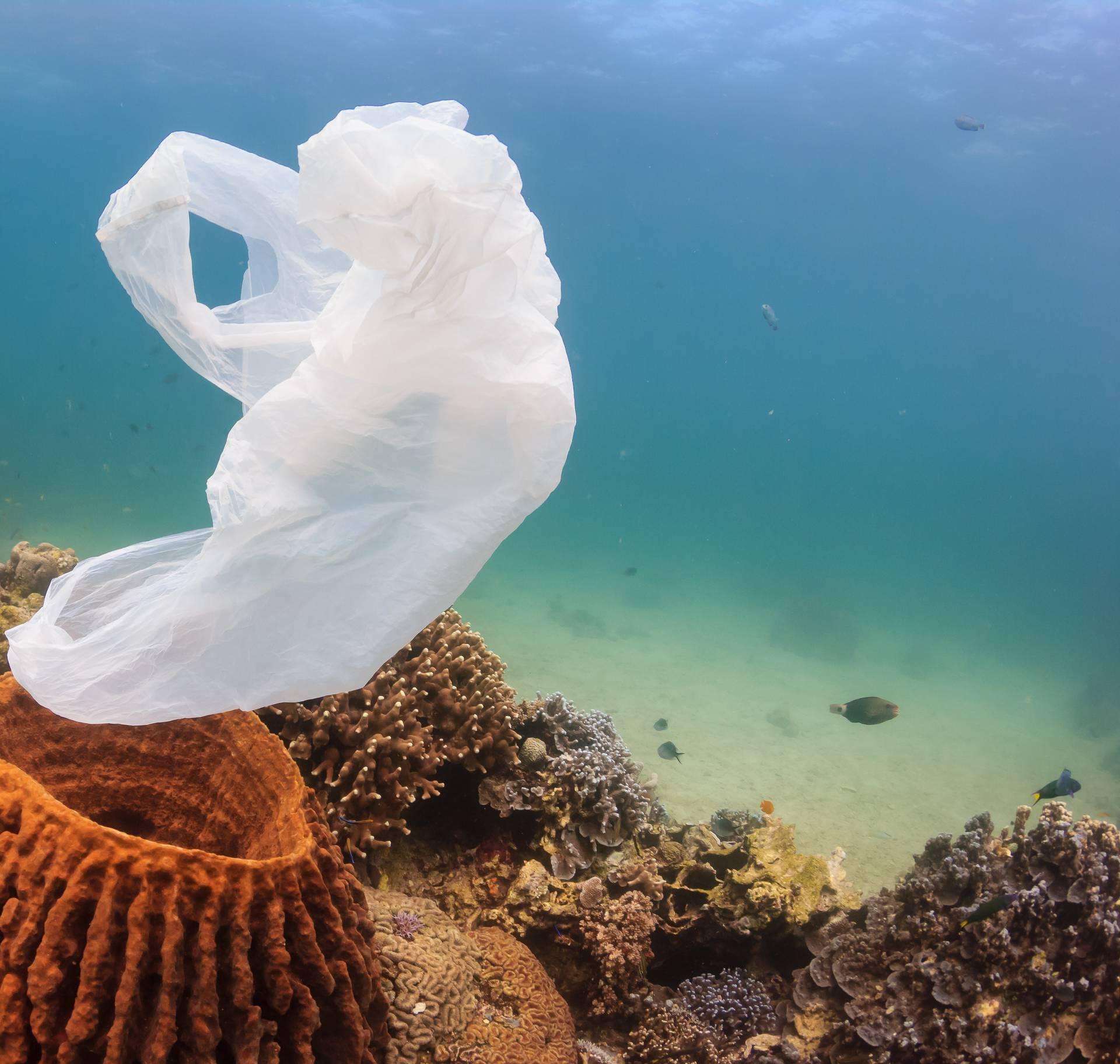 Stručnjaci u strahu: U moru će biti više plastike nego riba...
