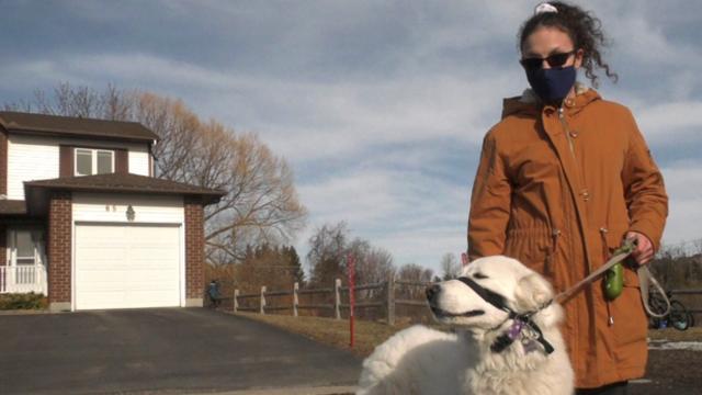 Pas heroj zaštitio vlasnicu kada je dobila napadaj: Blokirao je cestu kako bi 'pozvao' pomoć
