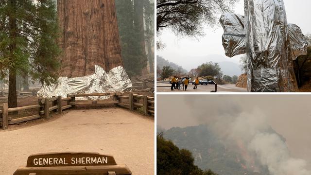Sekvoje u Kaliforniji omataju u vatrootporne deke da ih zaštite