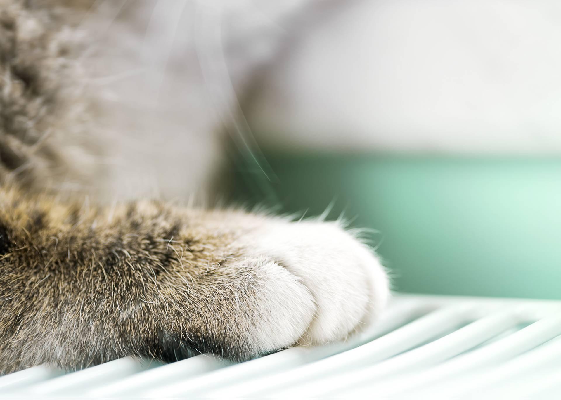 Zašto mace imaju bijele šapice: Riječ je o posebnoj prilagodbi