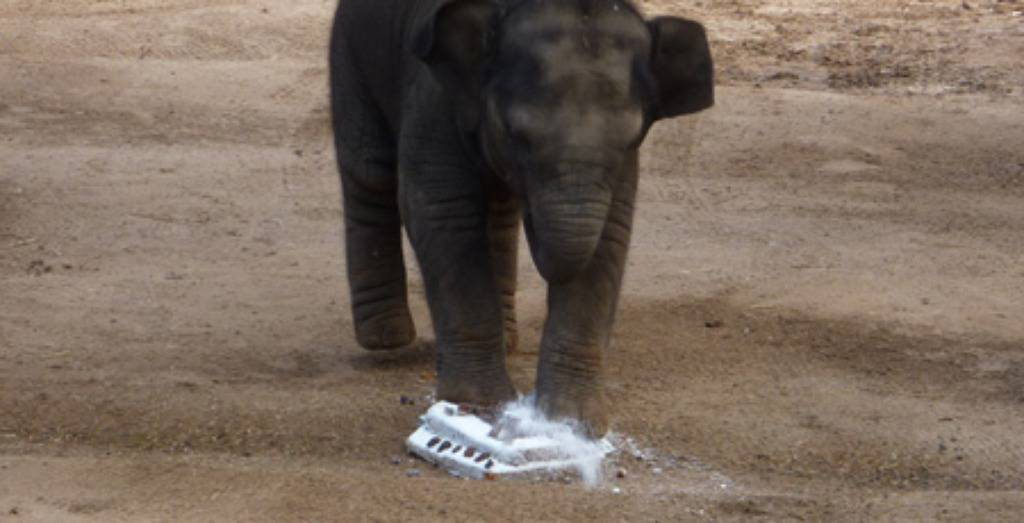 Zoo.org.au